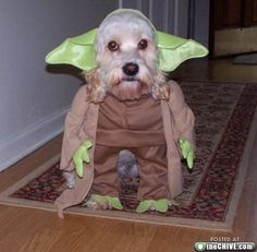We have two dogs.   Which one will get this costume come October???
