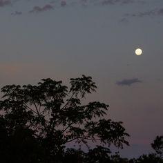 Moon through twilight, Shot on Sony Nex-5 - Trangie, NSW #moon #home #backyard #twilight #silhouette #tree #photography #sky #nofilter