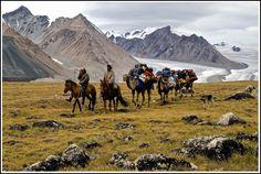 Camel train, Potanin Glacier, Mongolia Photography by Rom Welborn