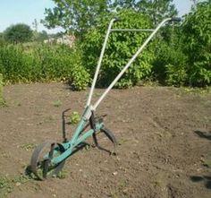 Работа на земле c cадово-огородными культурами является многогранным творчеством