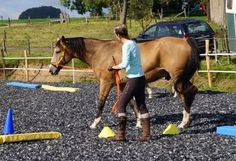 Dual-Aktivierung und Equikinetic mit Kirsten Fleiser - Beweglich, konzentriert, flexibel – so ein Pferd möchte doch jeder (Pferde, Reiten, Reiterhöfe, Pferd, Gestüt, Zucht)