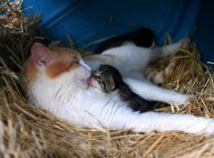 Barn Cat Mother and Baby.