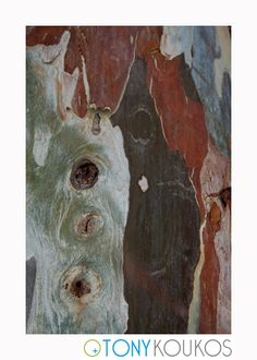 bark, texture, colours, shapes, travel, photography, art, Tony Koukos, Koukos