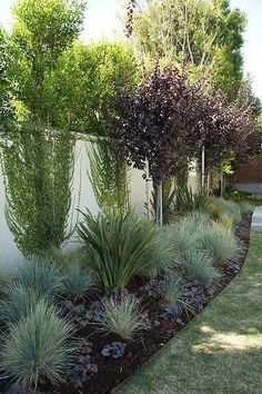 Landscaping along fence Garden Fence landscaping Drought tolerant landscape Backyard landscaping Easy landscaping - Drought Tolerant Landscape & Path Ideas - Landscaping Along Fence, Landscaping Tips, Garden Landscaping, Modern Landscaping, Landscaping Software, Texas Landscaping, Modern Backyard, Landscaping Equipment, Hydrangea Landscaping