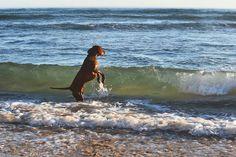 Childers with someone elses dog #dslr #nikon #ocean #waves #majestic #psychedelic #bluesky #photography #warrnambool #gopro #goprohero #mysticalfedora #mystical #unemployed #nature #wave #surf #surfing #summer #destinationwarrnambool #dog #dogs by justin17turner