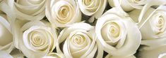 Angelo Ricevimenti - Catering e Banqueting Wattpad, Rose, Catering, Icing, Spring Summer, Adolescents, Summer Weddings, Desserts, Fanfiction