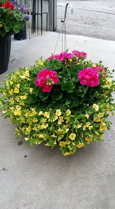 Up to 50% off remaining outdoor plants. Including hanging baskets and patio planters ‪#FloristOrangeville‬ ‪#GardenCentre‬ ‪#Antiques‬ ‪#Vintage‬ ‪#‎HomeDecor‬‪ #GardenDecor‬ ‪#OrangevilleFlowers‬