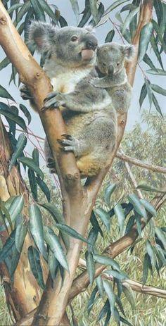 Up a Gum with Mum – Koala with cub, Carl Brenders Wildlife Art Wildlife Paintings, Wildlife Art, Animal Paintings, Animal Drawings, Baby Animals, Animals And Pets, Wild Animals, Baby Koala, Koala Bears