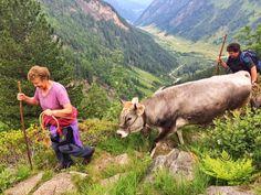 Immer mehr Bergbäuerinnen und Bergbauern sperren ihre Hoftüre zu. Animals, Farmers, Volunteers, Mountains, School, Animales, Animaux, Animal, Animais