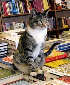 Bookstore cats are the best -- and here's a collection of all the bookstore cats I can find! I Love Cats, Crazy Cats, Cool Cats, Gatos Cats, Matou, Beltane, Tier Fotos, Cat Health, Pet Birds