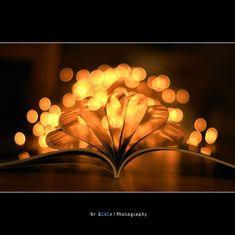 Beautiful Bokeh photo.