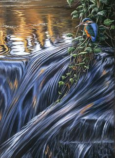 Galleries   Jeremy Paul - Wildlife Artist