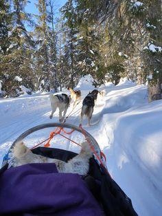 Huskykoirien vauhdin hurmaa. Lammintupa, Kuusamo. Outdoor, Outdoors, Outdoor Games, The Great Outdoors