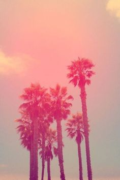 Summer Vibes, pink palm treess, sunsets, california