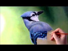 Blue jay timelapsed painting - YouTube