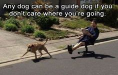 Funny Animal Pictures Of The Day – 24 Pics: