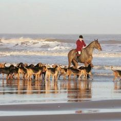 a hunt (with a man-made scent, no fox) on the beach!