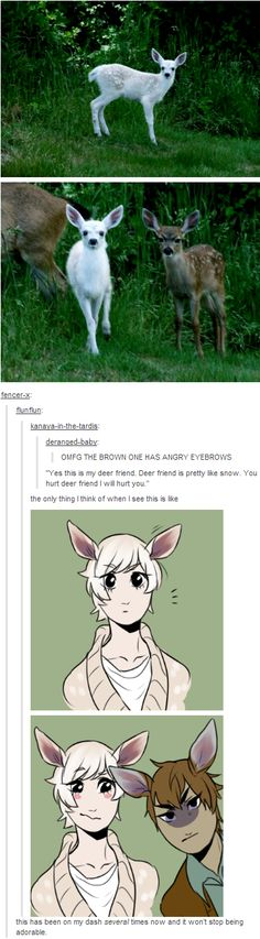Angry Eyebrows Deer