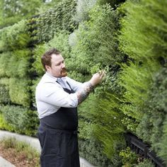 Top Chef contestant with a wall of herbs at his restaurant.