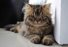Cute or not ? Kittens Cutest, Cats And Kittens, Cute Cats, Beautiful Kittens, Animals Beautiful, Cat Behavior, Tier Fotos, Love Pet, Cute Baby Animals