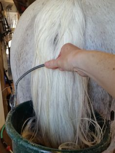 Tips for washing your horse's tail - you can do this… http://www.proequinegrooms.com/index.php/tips/manes-and-tails/washing-the-tail/