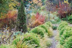 Fall gardens at Lost Horizons Nursery Lost Horizon, Autumn Garden, Nursery, Gardens, Plants, World, Baby Rooms, Garden, Baby Room