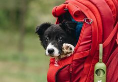 A step-by-step guide on how to get your dog comfortable with riding in the G-train backpack Cute Dogs And Puppies, I Love Dogs, Unique Animals, Cute Animals, Biking With Dog, Commute To Work, Dog Carrier, Dog Travel, Pet Carriers