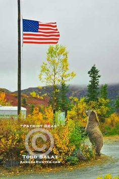 Patriot Bear, aurora borealis photo from Alaska