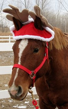 Christmas horse ! Oh my goodness yes!! :D