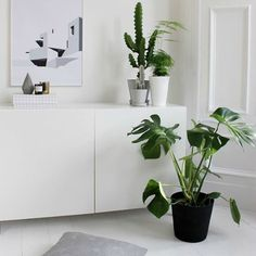 """My #monstera looks just like this one. Got a thing for indoor plants!. Fiddle figs and monstera obsession definitely. Not sure whether I'll get in on the…"""