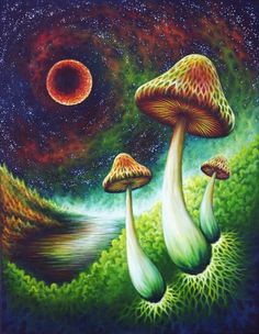 Image shared by nemesis. Find images and videos about art, trippy and psychedelic on We Heart It - the app to get lost in what you love. Psychedelic Art, Images Alphabet, Trippy Mushrooms, Mushroom Tattoos, Acid Art, Trippy Wallpaper, Psy Art, Mushroom Art, Hippie Art