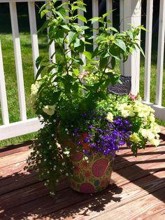 Colorful pot. So cute!