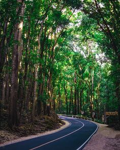 Zig zag road is a pain in the ass specially if people don't obey the road rules. I was in an bike accident near this place. However it's a part of living . Follow me @patrick.jarina . #travelling #traveler #travelholic #traveladdict #travelphotography #naturephotography #landscapephotography #jungle #rainforest #trees #tree #roadtrip #bike #manmade #nature #repeat #explore #explorer #wanderlust #wanderer #experience #goodvibes #bad #backpacking #adventure #sunset #forest #living #bohol #philippi Landscape Photography, Nature Photography, Travel Photography, Road Rules, Rainforest Trees, Bohol, Zig Zag, Backpacking, Repeat