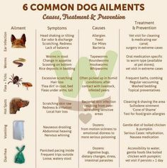 What to do if your dog gets sick