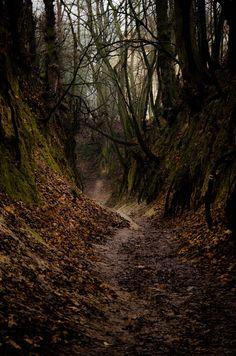 Scary forest by Mateusz Strzeszewski Forest Photography, Landscape Photography, Ocean Photography, Photography Tips, Wedding Photography, Haunted Forest, Magical Forest, Spooky Places, Haunted Places