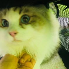 Yes we groom cats. A clean cat is a happy cat, and we're here to help! From nail trims to bathing, a little maintenance goes a long way…