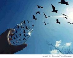 Releasing the birds | Amazingly Timed Photos
