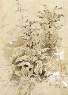 The Athenaeum - Plant Study, Catskill Mountains (William Trost Richards - )