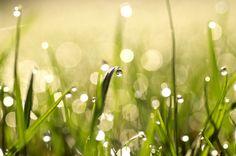 Verkauft bei OhMyPrints: Morgentau im Gras