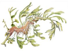 Artist Martha Hill Schafer's paintings of wildlife and nature, from around the world, unforgettable moments captured in watercolor that appear on greeting cards, prints and luggage tags. Ocean Art, Ocean Life, Magical Creatures, Sea Creatures, Dragon Project, Leafy Sea Dragon, Drawing Sketches, Sketching, Body Art Tattoos