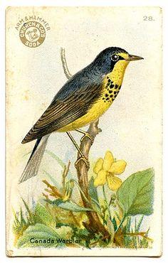 Free Vintage Clip Art - Pretty Little Birds - The Graphics Fairy