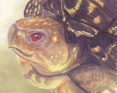 Garden Box Turtle, watercolor by Justine Remington.