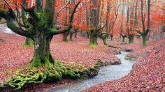 Parque Natural de Gorbeia, País Vasco El País Vasco es uno de los lugares más verdes de España… y quizás por eso quizás uno de los más bonitos en cuanto llega el otoño y el verde se convierte en ocres y rojos. El Parque Natural del Gorbea es el más grande de la Comunidad y está lleno de hayas, pero también de robledales, alisos, sauces, fresnos y álamos. Si a partir de octubre no tienes planes, date una vuelta y déjate seducir.