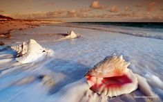 seashells on the beach - Google Search