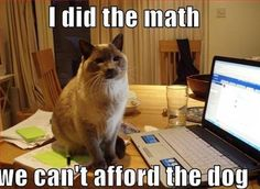 LOL!!! If a cat did know how to use a calculater the cat would tell you that