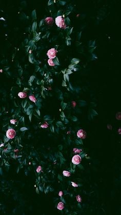 48 Trendy Flowers Wallpaper For Phone Backgrounds Iphone Tumblr Wallpaper, Tumblr Backgrounds, Trendy Wallpaper, Aesthetic Iphone Wallpaper, Aesthetic Wallpapers, Floral Wallpapers, Iphone Backgrounds, Wallpaper Ideas, Artistic Wallpaper