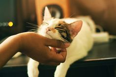 Keeping all our fur buddies calm during quarantine. Emisha hemp CBD catnip is a fun way for cats to enjoy the experience and benefits of CBD. Made specifically for cats, our catnip is a great way to introduce CBD in a positive and familiar way. #CBDCatnip #CBDforCats #CatHealth #CatCBD www.EmishaWellness.com