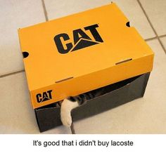 it's a good thing I didn't buy lacoste