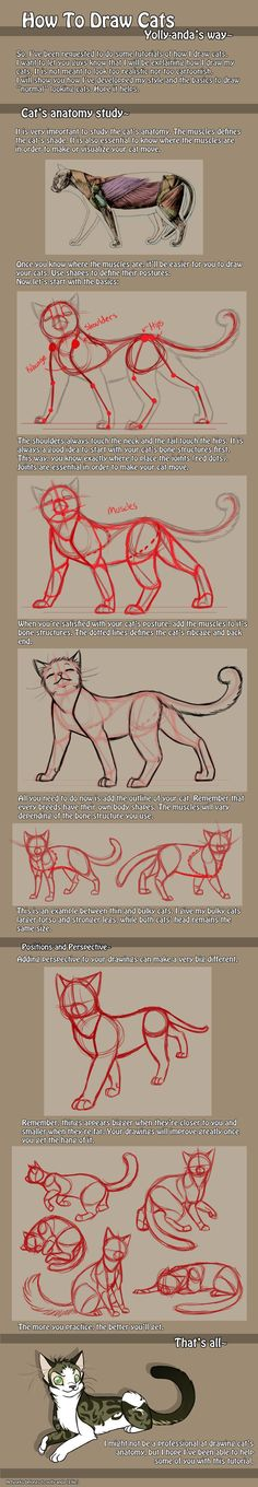 How to draw cats - anatomy from * Yolly-anda on deviantART -. - How to draw cats – anatomy from * Yolly-anda on deviantART – How to draw cats – A - Drawing Lessons, Drawing Techniques, Drawing Tips, Art Lessons, Anatomy Reference, Drawing Reference, Birthday Drawing, Deviantart, Cat Anatomy