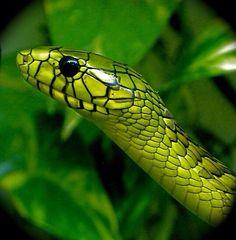 Beautiful green snake